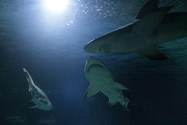 Valencia con niños: el Oceanográfico